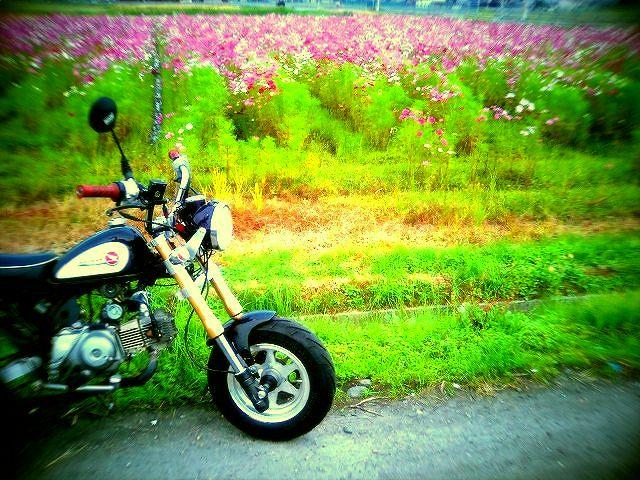 kk-20111103 005.jpg